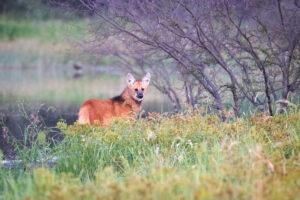 Chaco Litoral Argentino Turismo en Argentina el Impenetrable fauna