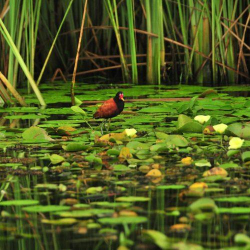 Corrientes Litoral argentino turismo en argentina esteros del ibera aves