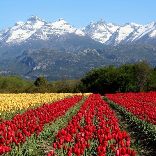 Trevelin Tulipanes Chubut Patagonia Turismo en Argentina